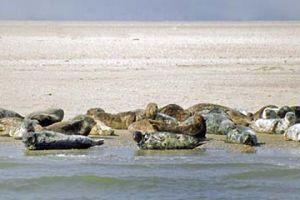 Seal tours