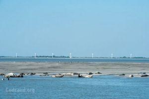 Robben beobachten Bootsfahrt